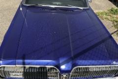 Blue-Cougar-2-900-09-15