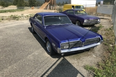 Blue-Cougar3-900-09-15